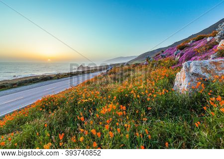 Wild Flowers And California Coastline In Big Sur At Sunset