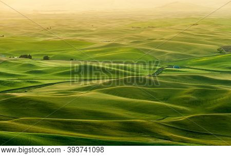 Beautiful Landscape Of Crop Fields In The Palouse Region Of Eastern Washington, Usa In The Morning