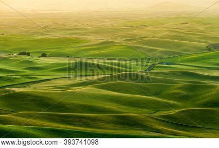 Beautiful Landscape Of Crop Fields In The Palouse Region Of Eastern Washington, Usa In The Morning
