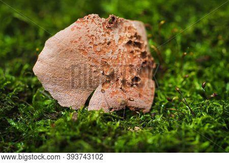 Still Life- Stones In Green Moss For Interior Decoration