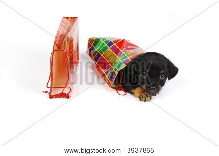 Mongrel puppy in gift bag in tartan pattern. poster