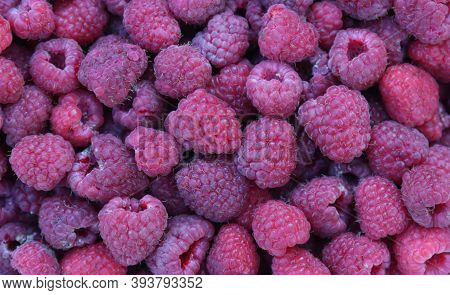 The Harvested Harvest Of Ripe Raspberries. Background.
