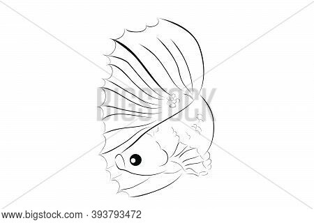 Outline Vector Betta Or Siamese Fighting Fish , On Whitebackground.