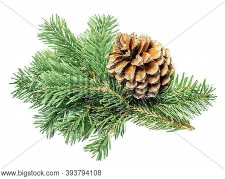 Fir Tree Branch With Pine Cone Isolated On White Background. Christmas Decoration