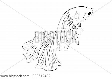 Outline Vector Betta Or Siamese Fighting Fish, Giant Half Moon, On White Background.