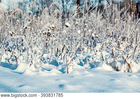 Winter landscape with the snowy winter field and frozen winter plants in sunset light winter field landscape