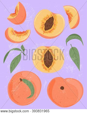 Ripe Peaches, Whole, Sliced And Half Sliced Peaches. Sweet Nectarine Fruits Vector Hand Drawn Illust
