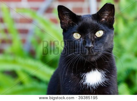 A Black Cat With Striking Yellow Eyes.