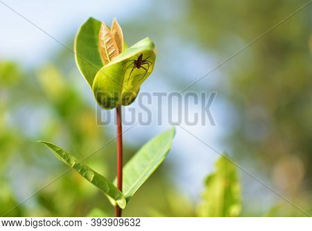 A Young Sapling Of Spruce Grows In The Forest Ground With Green Moss. Sapling Spruce Planted By Natu