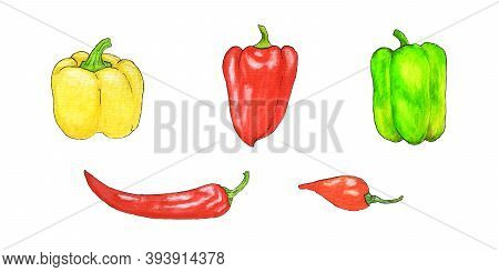 Watercolor Set With Chili Peppers, Sweet Yellow Peppers, Bell Peppers, Red Hot Peppers. Set For Desi
