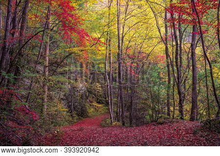 Stunning Fall Foliage In The Tennessee Smoky Mountains
