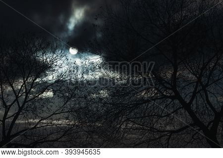 Dark And Mysterious Trees, Full Moon In Magic Night Cloudy Sky, Natural Miracle Phenomenon
