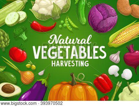 Veggies Farm Harvest. Vegetables And Greenery Banner With Artichoke, Asparagus And Broccoli, Caulifl