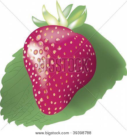 Vector ripe strawberry