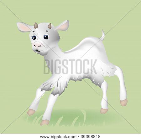 Vector little goat