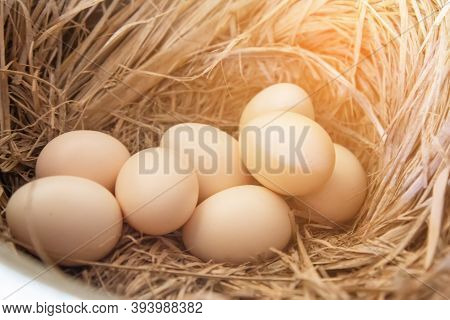 Close Up Of The Several Eggs On A Straw. Eggs In The Coops And Straw.