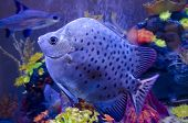 Beautiful underwater scenery - Exotic fish in aquarium close-up poster