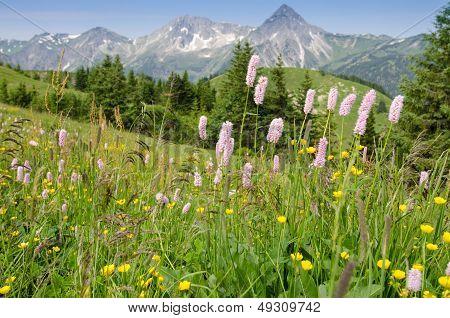 Flower Meadow In  Tirol Austria