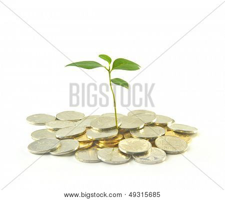 Close up of tree growing from pile of coins