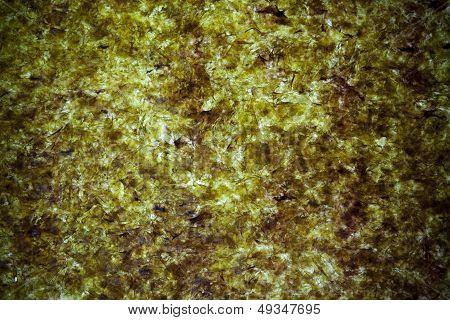 Dried Seaweed Background