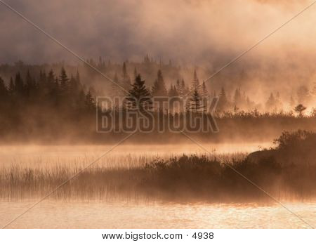 Misty Golden Morning