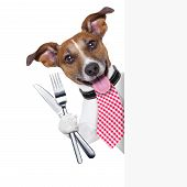 hungry dog with cutlery waiting for the meal poster