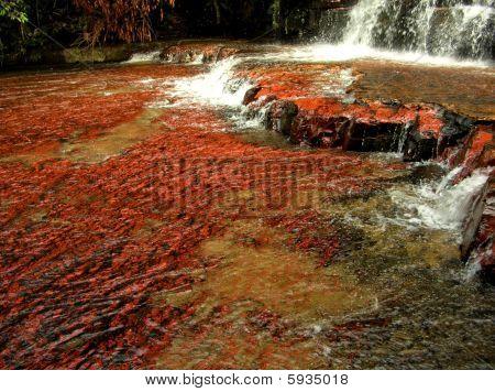 rot fällt