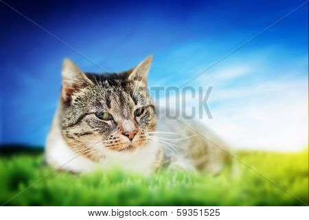 Cute cat lying on green spring grass on sunny day. Colorful, vibrant composite poster