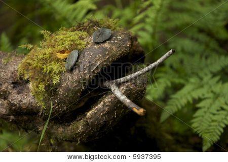 Alaskan snake