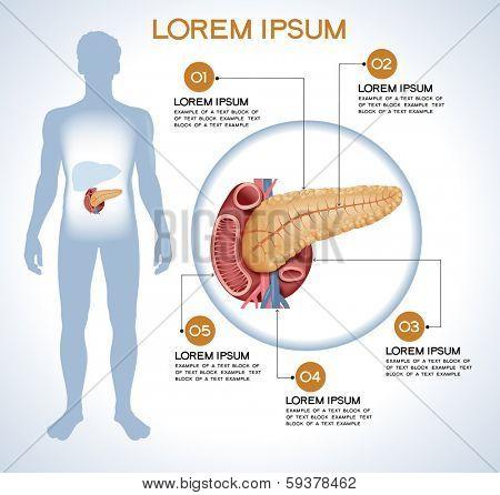 Pancreas. Modern medical infographics. Internal organs in a human body. Anatomy of people