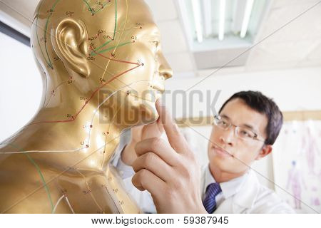 Chinese Medicine Doctor Teaching  Acupoint On Human Model