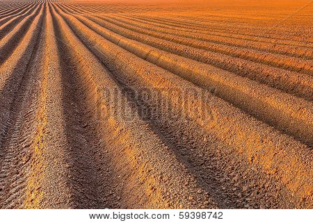 Plough Agriculture Field Before Sowing