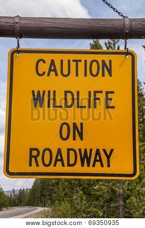 Caution Wildlife On Roadway Sign