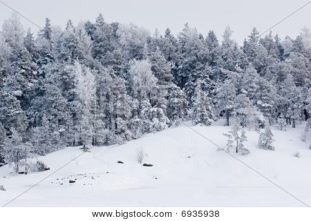 Snowy Forest View