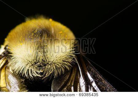 Bee ready for flight extreme macro