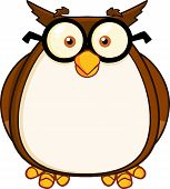 Wise Owl Teacher Cartoon Character With Glasses  Illustration Isolated on white poster