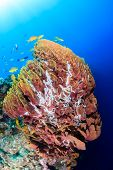 Tropical fish swim around a large sponge on a coral reef poster