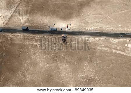 Nazca Lines, Peru - hand and tree