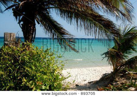 Beach Path Opening