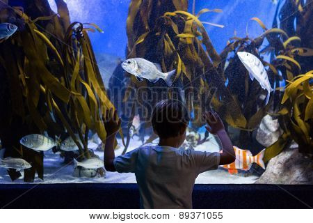Young man looking at fish and algae in a tank at the aquarium