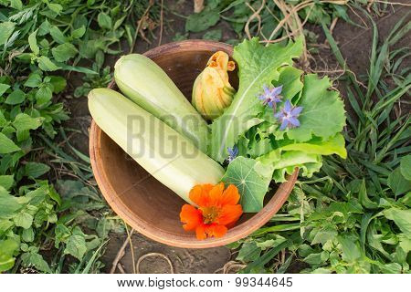 Bowl Of Freshly Picked Vegetables On The Ground