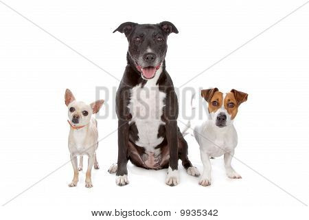 Small Group Of Dogs