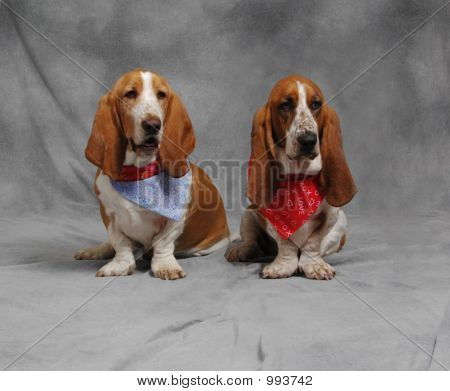 Louie And Lilly The Basset Hounds Sitting