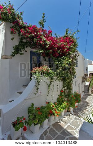 House with flowers in Naxos island, Cyclades