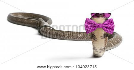 king cobra wearing glasses and a bow tie in front of a white background poster
