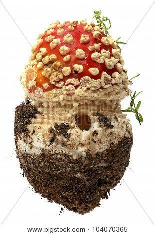 Amanita poisonous mushroom, isolated