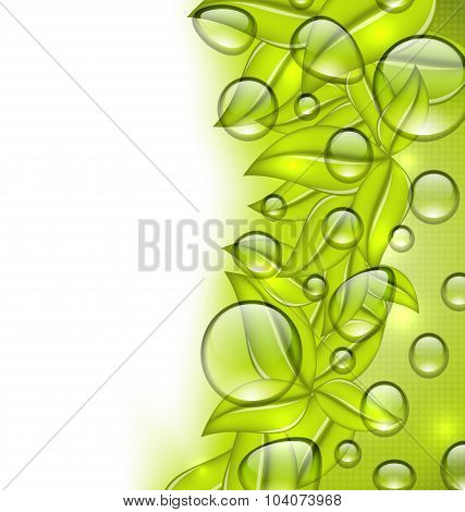 Water drops on fresh green leaves texture, copy space for your t