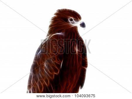 Black Kite Pariah Kite Milvus Migrans