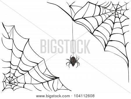 Spiderweb. Big black spider web. Black scary spider of web. Poison spider