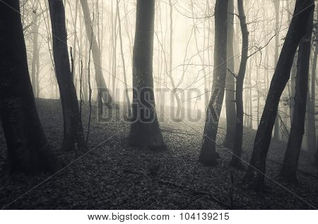 Trees in mysterious forest